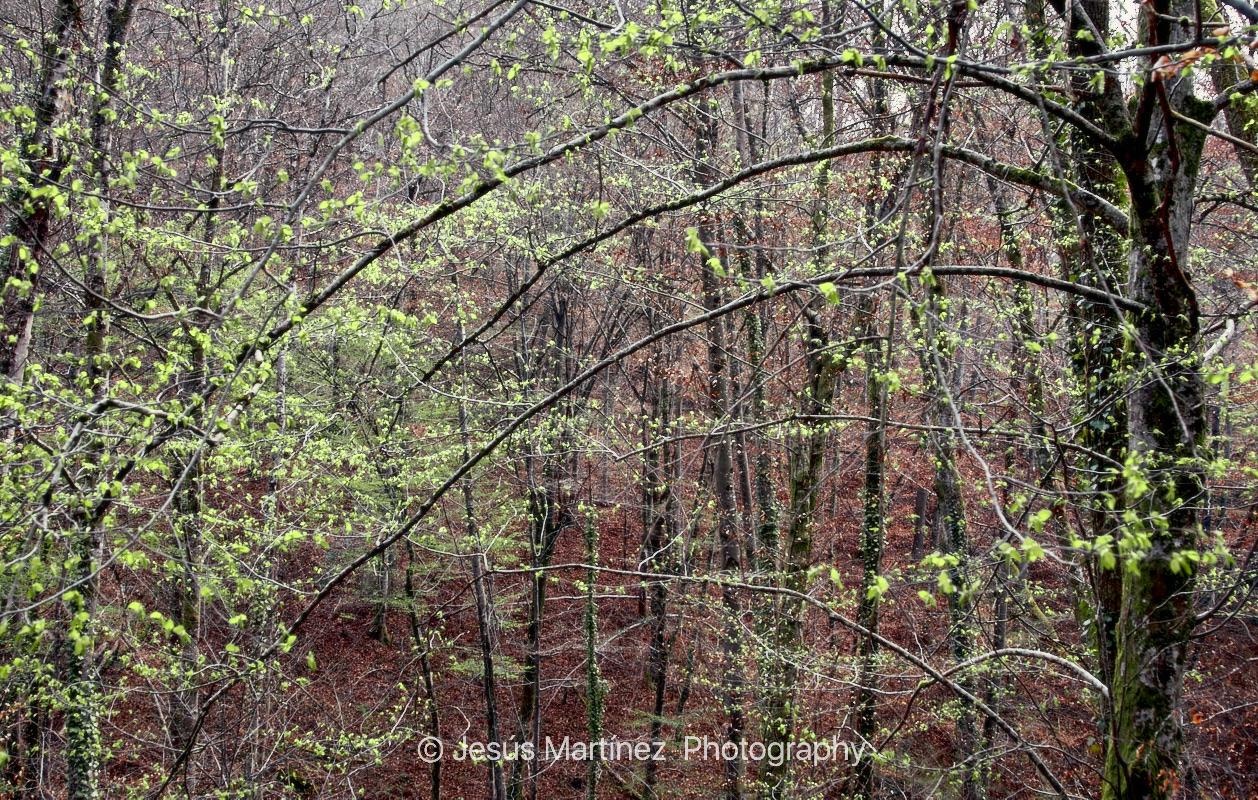Bosque en Vall du Lot