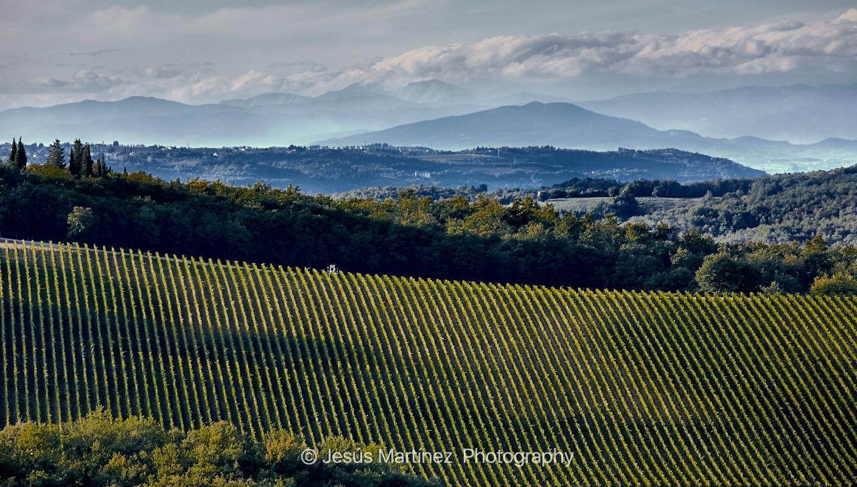 Vides de la Toscana