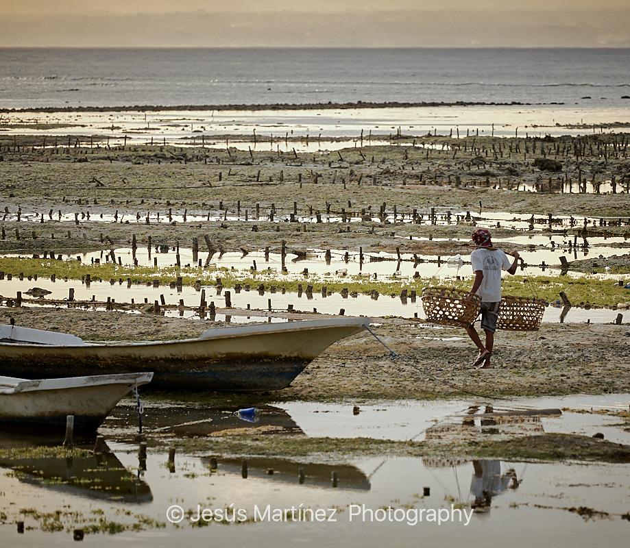 Recolector balinés de algas