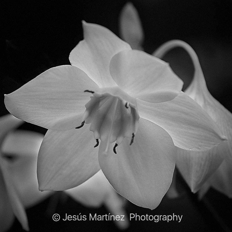 Orquídea blanca y verde en National Orchid Garden de Singapur